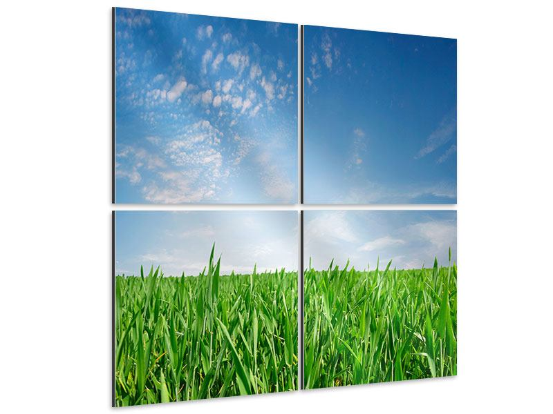 Aluminiumbild 4-teilig Das Gras