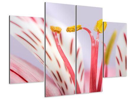 Aluminiumbild 4-teilig Close Up Die exotische Schönheit