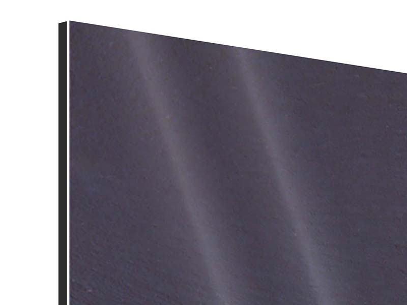 Aluminiumbild 4-teilig Callastrauss