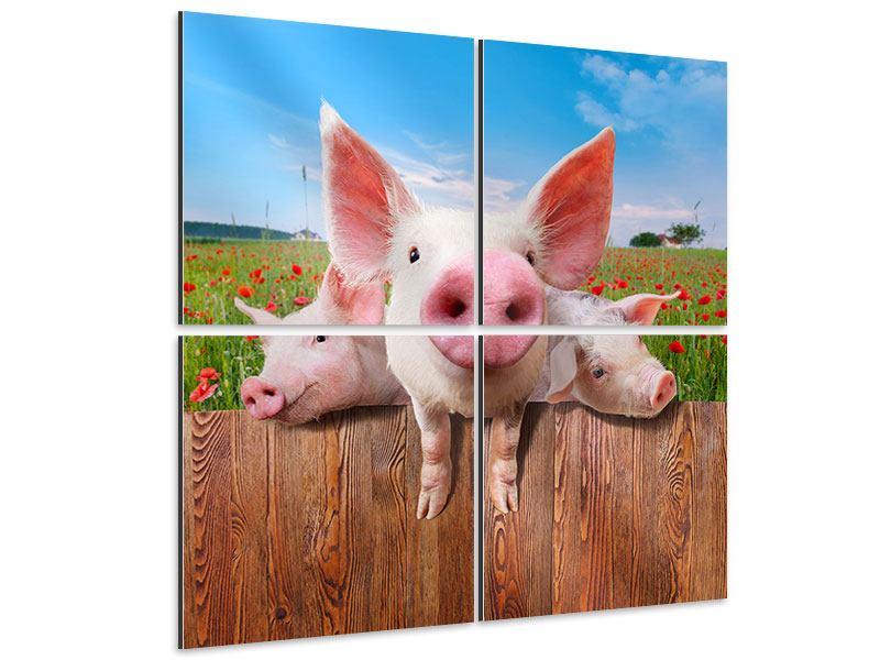 Aluminiumbild 4-teilig Schweinchen im Glück