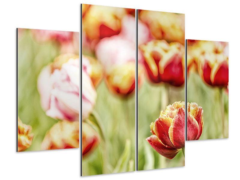 Aluminiumbild 4-teilig Die Schönheit der Tulpe