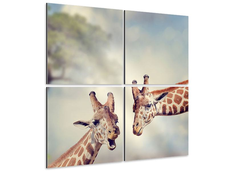 Aluminiumbild 4-teilig Giraffen