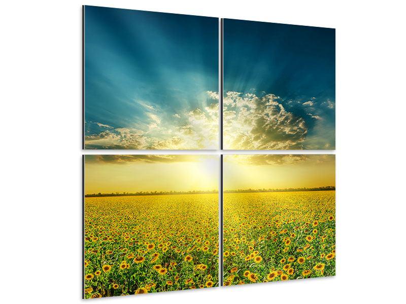 Aluminiumbild 4-teilig Sonnenblumen in der Abendsonne