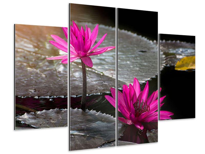 Aluminiumbild 4-teilig Seerosen im Morgentau