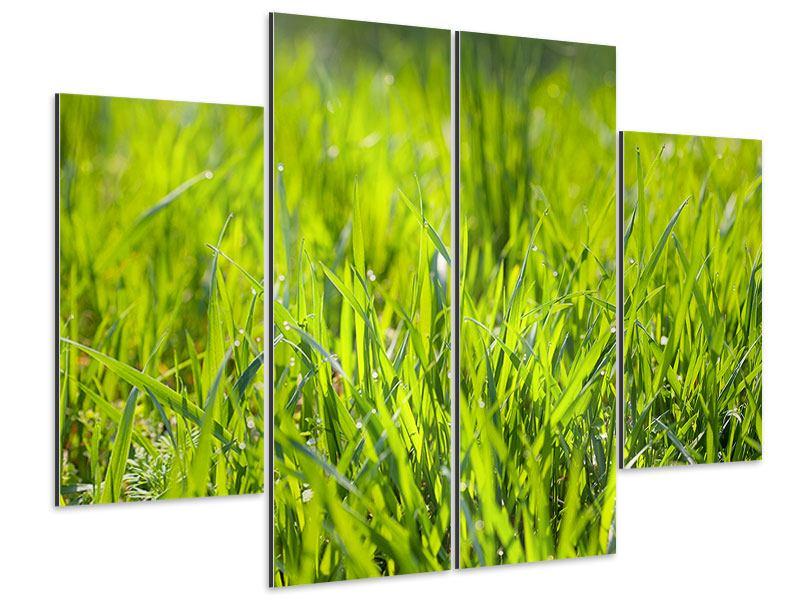 Aluminiumbild 4-teilig Gras im Morgentau