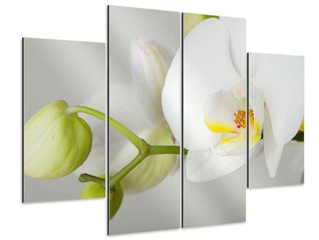 Aluminiumbild 4-teilig Riesenorchidee