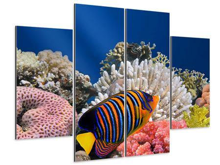 Aluminiumbild 4-teilig Mit den Fischen tauchen