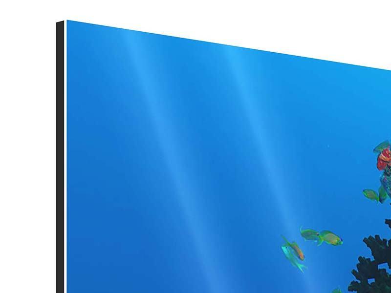 Aluminiumbild 4-teilig Die Welt der Fische