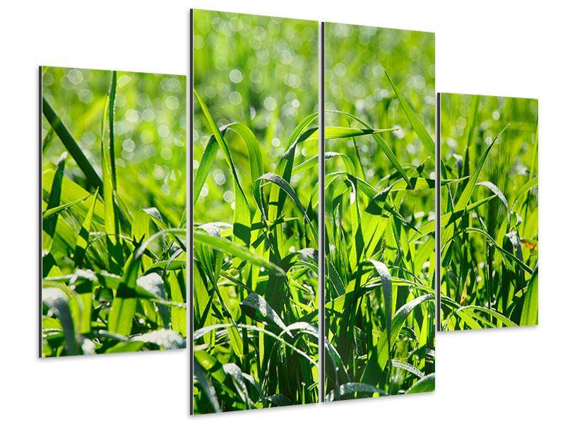 Aluminiumbild 4-teilig Sonniges Gras