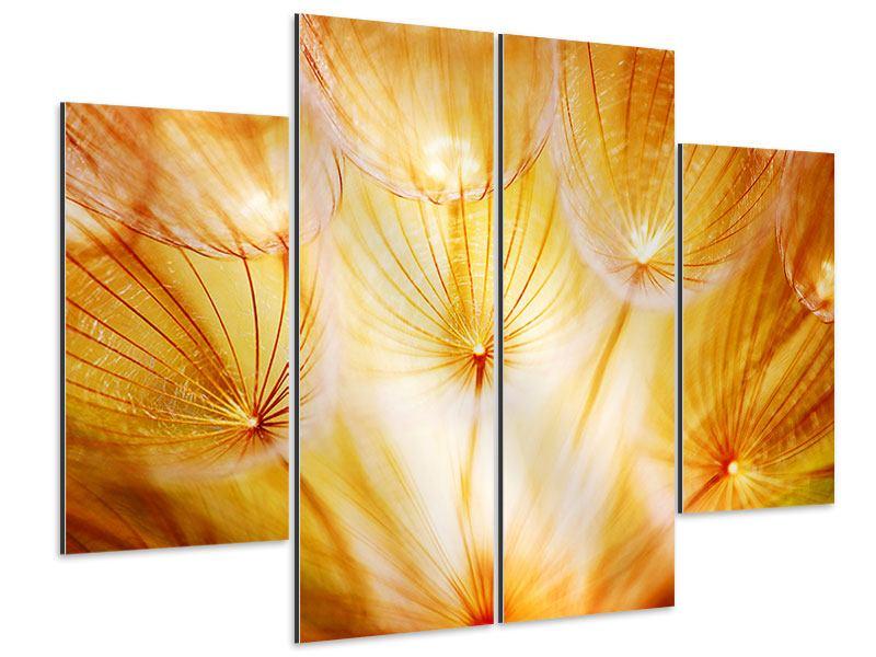 Aluminiumbild 4-teilig Close Up Pusteblume im Licht
