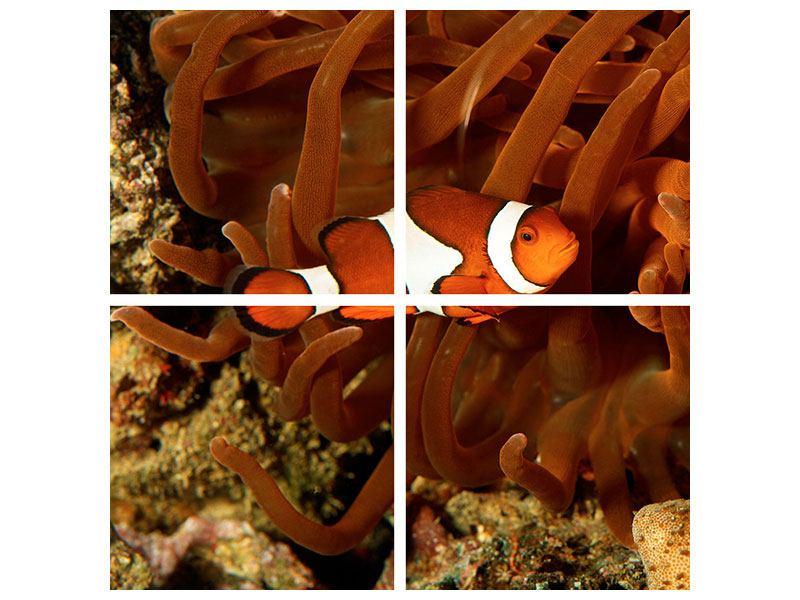 Aluminiumbild 4-teilig Nemo