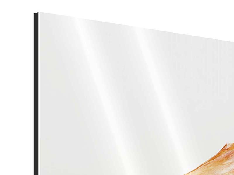 Aluminiumbild 4-teilig Die Tigergarnele