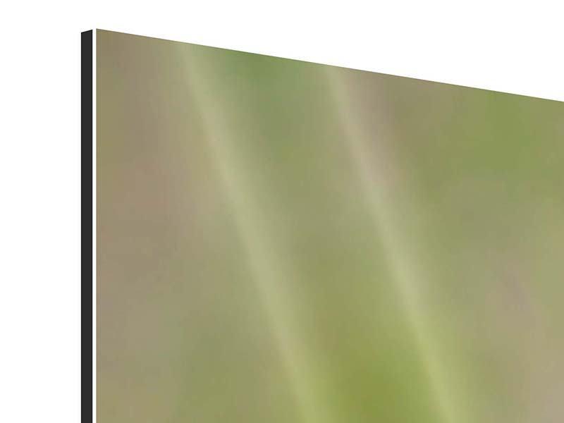 Aluminiumbild 4-teilig Die Wüstenblume