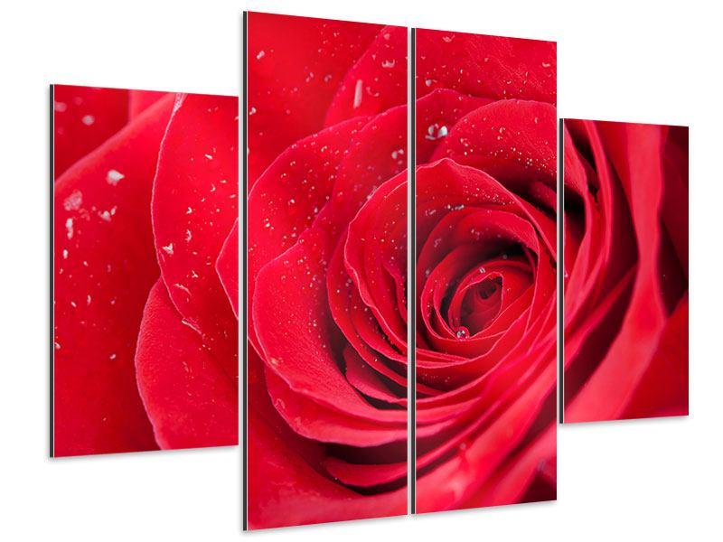 Aluminiumbild 4-teilig Rote Rose im Morgentau