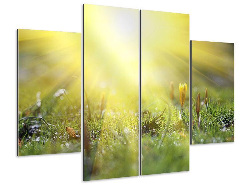 Aluminiumbild 4-teilig Blumige Wiese