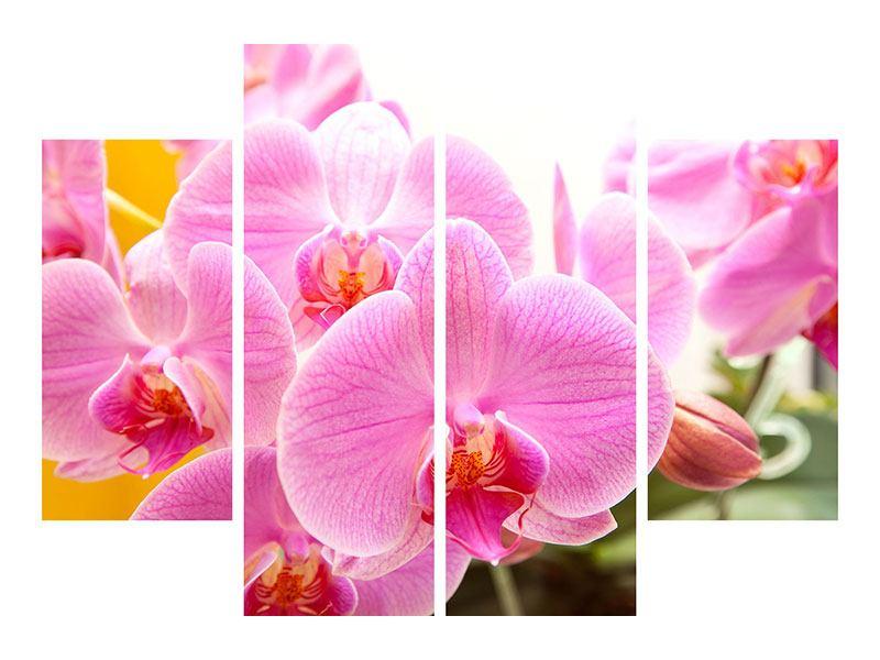 Aluminiumbild 4-teilig Königliche Orchideen
