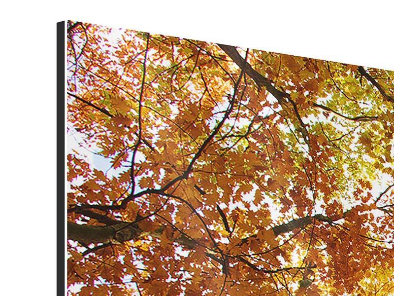 Aluminiumbild 4-teilig Herbstbäume