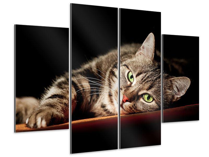 Aluminiumbild 4-teilig Entspannte Katze