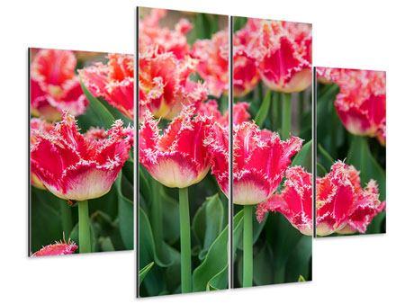 Aluminiumbild 4-teilig Die Tulpenwiese