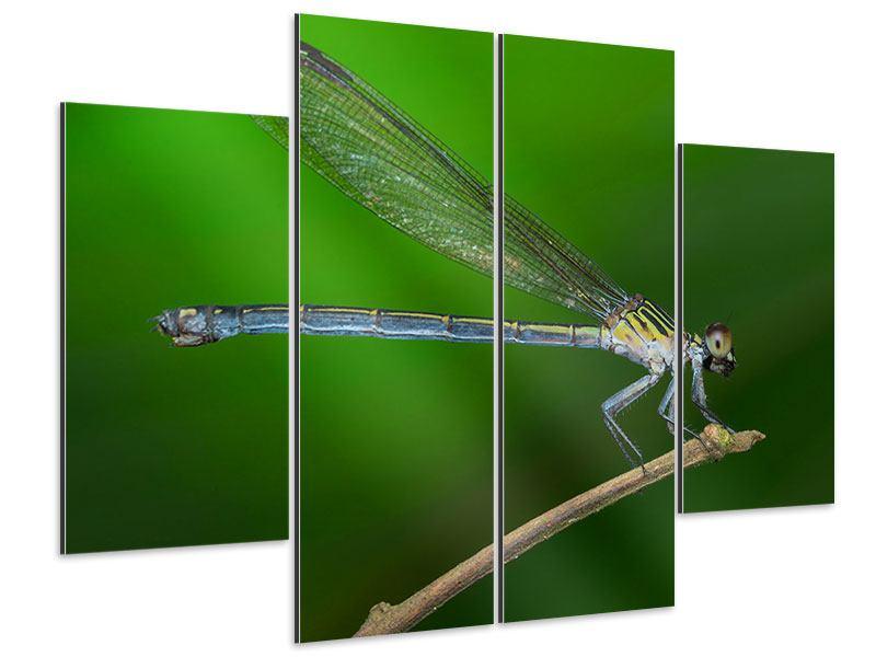 Aluminiumbild 4-teilig Die Libelle