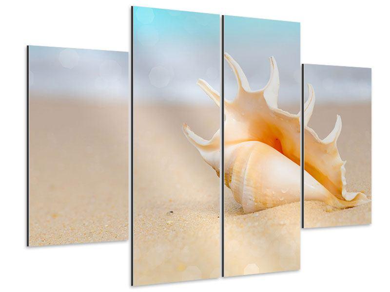 Aluminiumbild 4-teilig Die Muschel am Strand