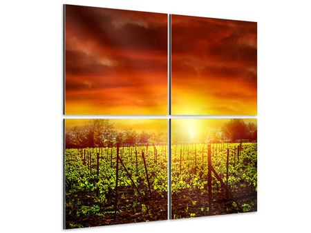 Aluminiumbild 4-teilig Der Weinberg bei Sonnenuntergang