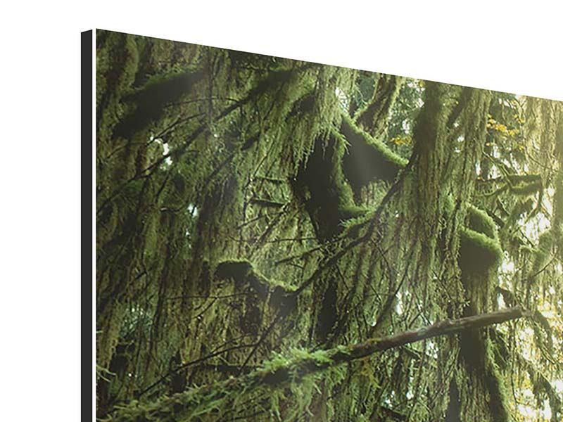 Aluminiumbild 4-teilig Verträumter Wald