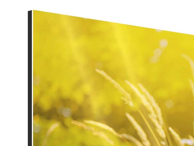 Aluminiumbild 4-teilig Sommerliche Blumenwiese