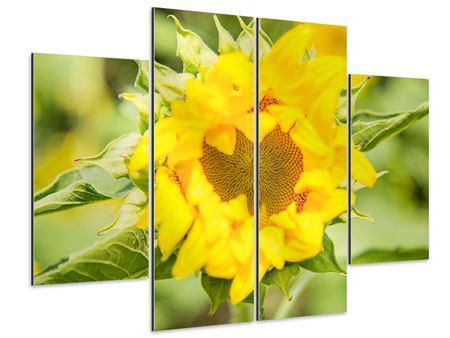 Aluminiumbild 4-teilig Wilde Sonnenblume