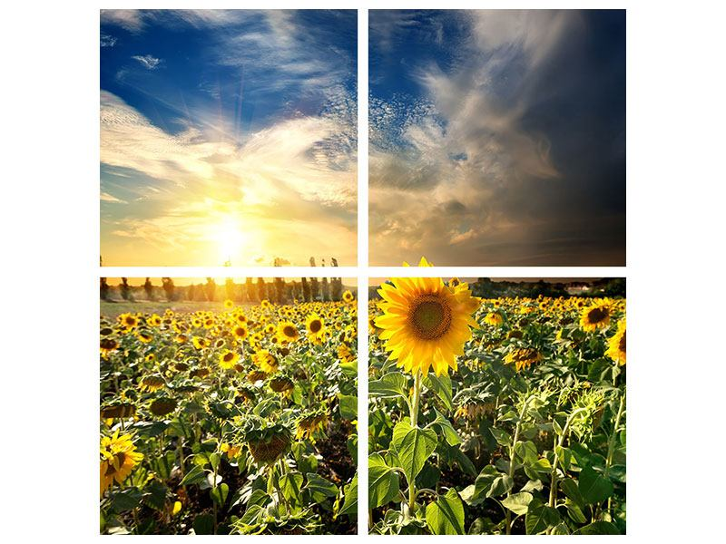 Aluminiumbild 4-teilig Sunny Flowers