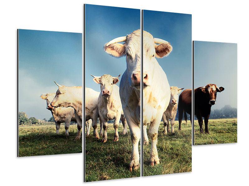 Aluminiumbild 4-teilig Kühe