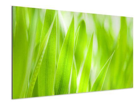 Aluminiumbild Gras XXL