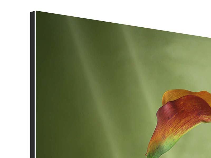 Aluminiumbild 3 Callas