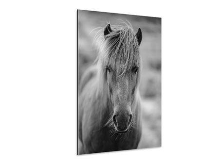 Aluminiumbild Da Steht Ein Pferd Auf`m Flur
