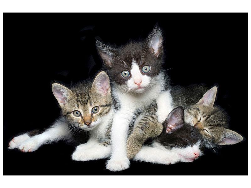 Aluminiumbild Katzenquartett