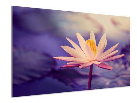 Aluminiumbild Lotus bei Sonnenuntergang