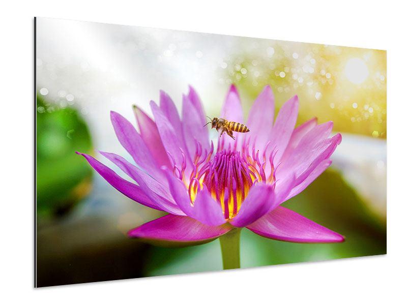 Aluminiumbild Die Lotus mit Biene