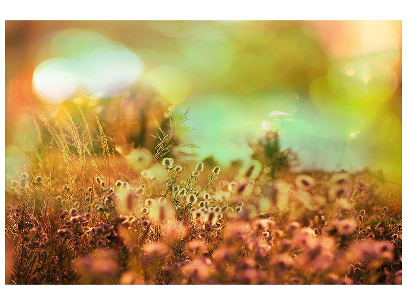 Aluminiumbild Blumenwiese in der Abenddämmerung