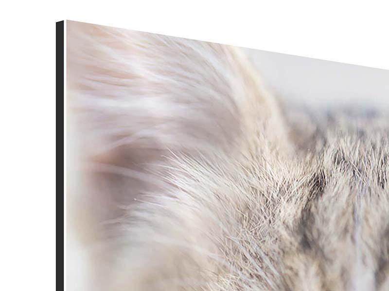 Aluminiumbild Katzenkind