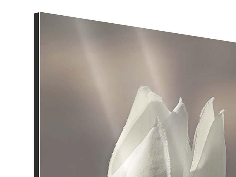 Aluminiumbild Die Tulpe in Sepia