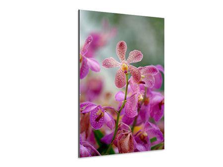 Aluminiumbild Orchidee Pünktchen