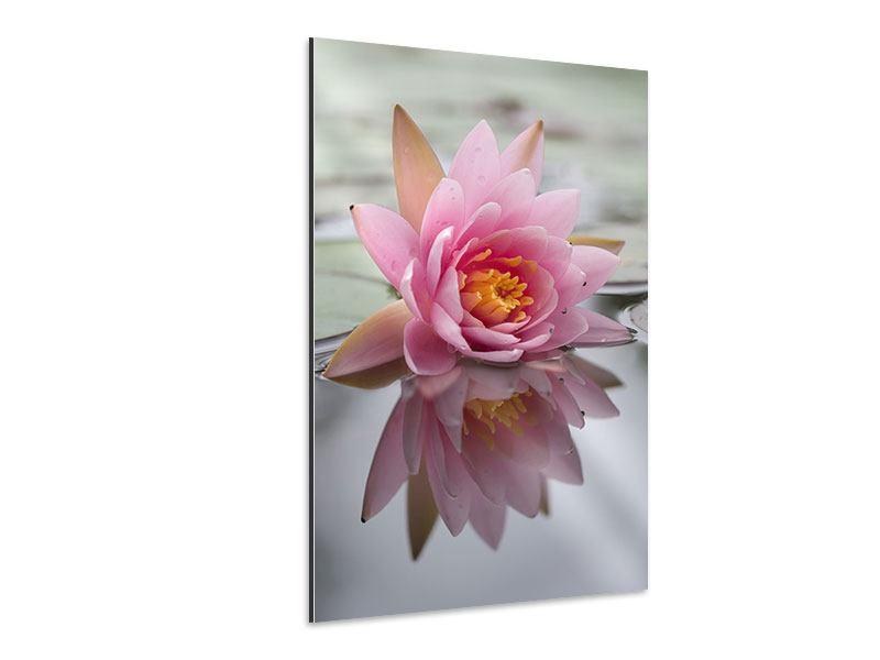 Aluminiumbild Lotus