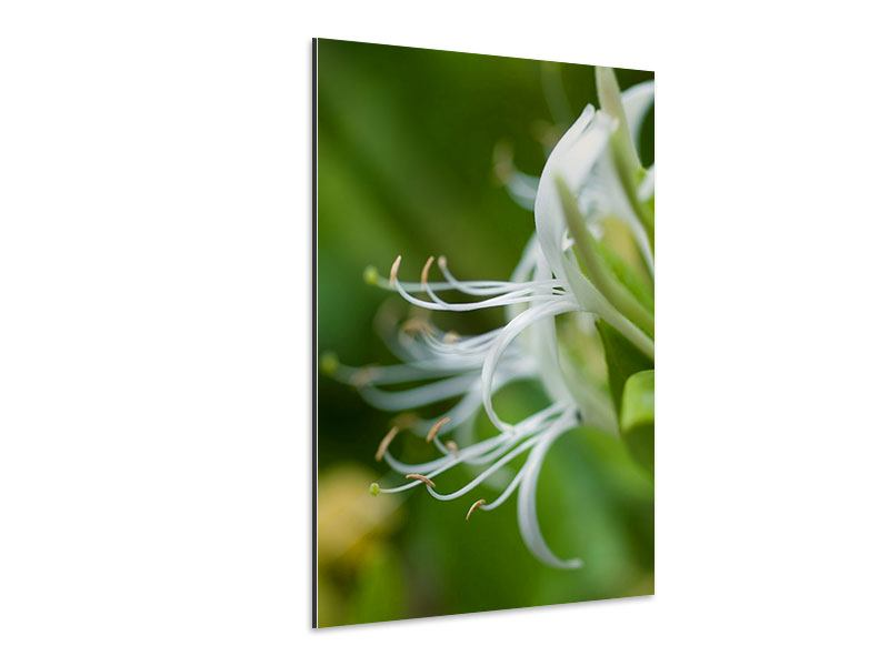 Aluminiumbild Makro Blüte
