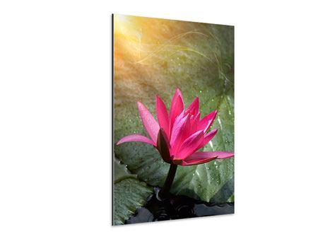 Aluminiumbild Lilie im Morgentau