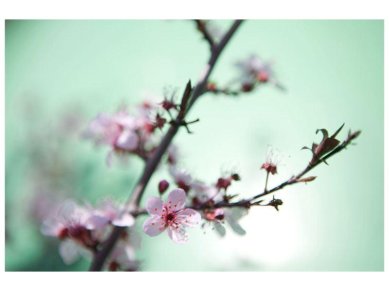 Aluminiumbild Die japanische Kirschblüte
