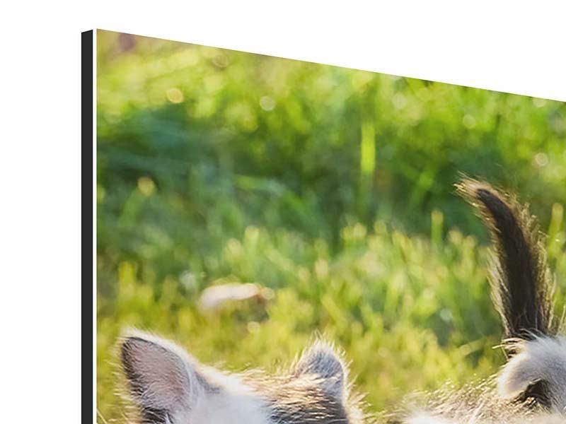 Aluminiumbild Katzenbabys