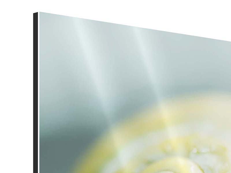 Aluminiumbild Die Schnecke