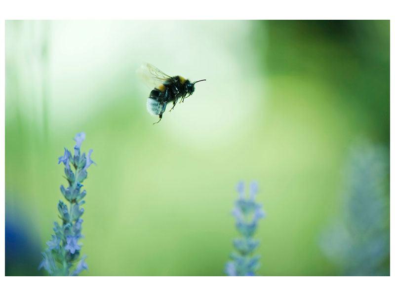 Aluminiumbild Die Biene