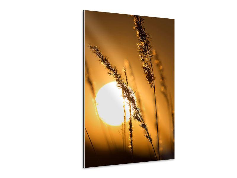 Aluminiumbild Romantischer Sonnenuntergang