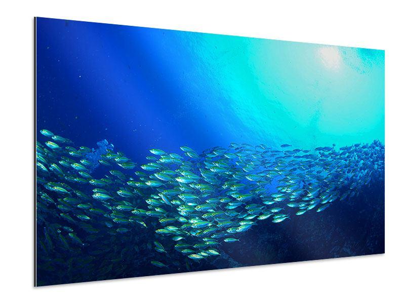 Aluminiumbild Fischschwarm